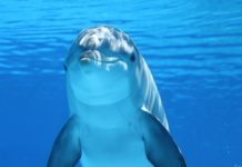 Dolphins are found along the Costa Del Sol