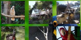 Park Loro Sexi - Bird Park