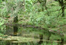 Los Alcornocales Nature Park