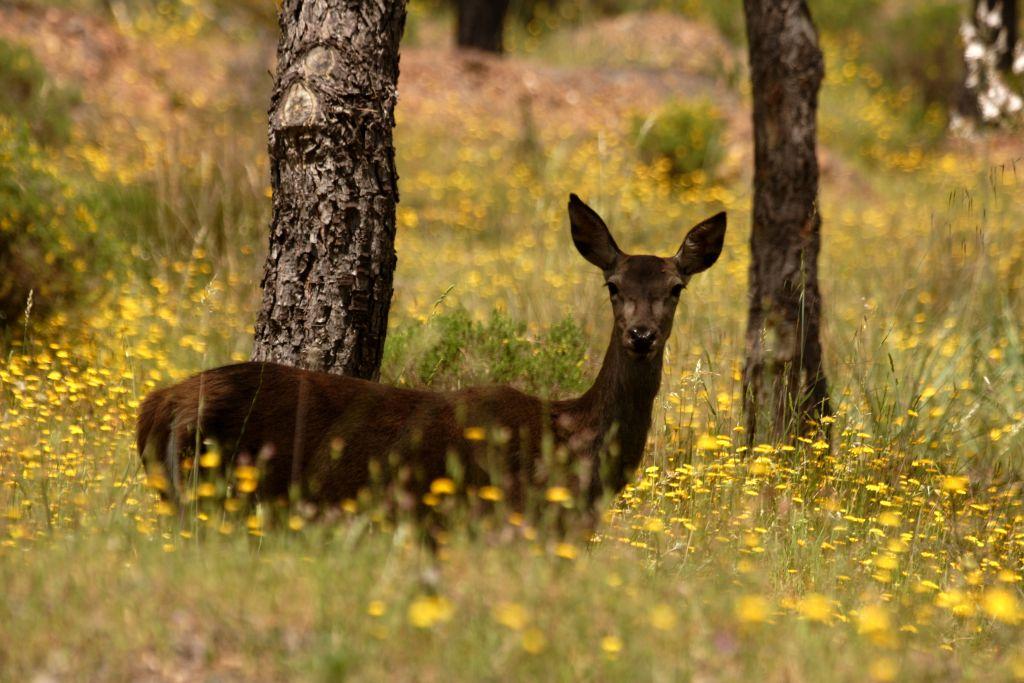 Sierra Norte Natural Park