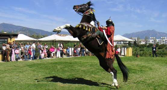 Finca Siesta Horse Shows