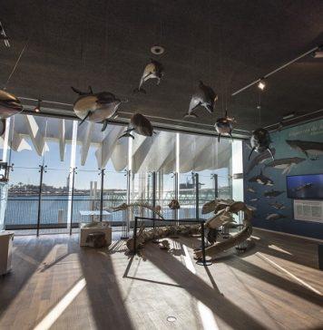 Museo de Alborania