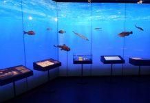 Museum of Nerja