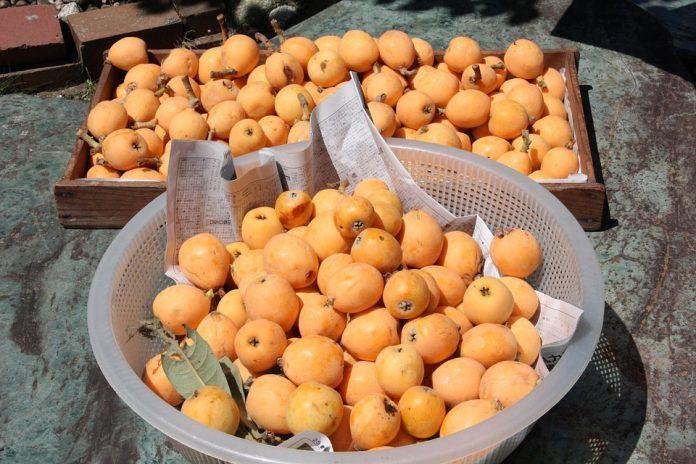 Loquat or Nispero Fruit